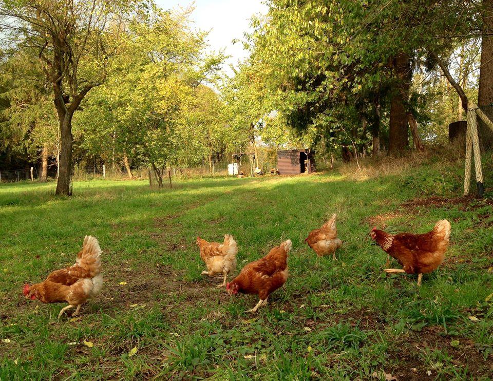 bio-eier-aus-freilandhaltung